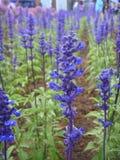 De Internationale Tuinbouwexpositionï ¼ bloem  van China Jinzhou Royalty-vrije Stock Afbeeldingen