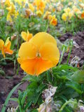 De Internationale Tuinbouwexpositionï ¼ bloem  van China Jinzhou Stock Foto