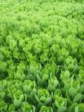 De Internationale Tuinbouwexpositionï ¼ bloem  van China Jinzhou Stock Afbeelding