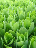 De Internationale Tuinbouwexpositionï ¼ bloem  van China Jinzhou Stock Afbeeldingen