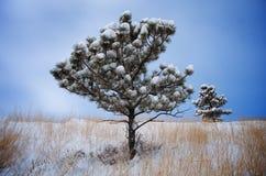 De invloed van de winter Royalty-vrije Stock Foto