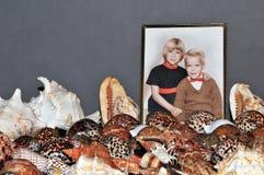 De inzameling en de foto van de zeeschelp Stock Afbeelding