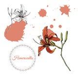 De inzameling met zwart-wit en kleurenschets van enig bloeit lilly en abstracte vlekken Hand getrokken inkt en gekleurde schets vector illustratie