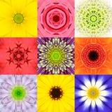 De inzameling plaatste Negen Bloem Mandalas Diverse Kleurencaleidoscoop Royalty-vrije Stock Afbeelding