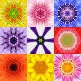 De inzameling plaatste Negen Bloem Mandalas Diverse Kleurencaleidoscoop Royalty-vrije Stock Foto