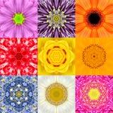 De inzameling plaatste Negen Bloem Mandalas Diverse Kleurencaleidoscoop Stock Foto