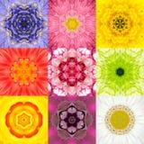 De inzameling plaatste Negen Bloem Mandalas Diverse Kleurencaleidoscoop Royalty-vrije Stock Fotografie