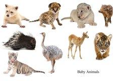 De inzameling van babydieren Stock Afbeeldingen