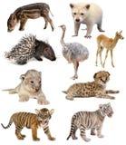 De inzameling van babydieren Stock Foto's