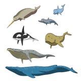 De inzameling van beeldverhaalwalvissen Stock Afbeelding