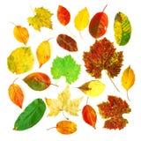 De inzameling van bladeren stock foto