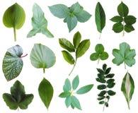 De inzameling van bladeren Royalty-vrije Stock Afbeeldingen