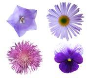 De Inzameling van bloemen Stock Foto