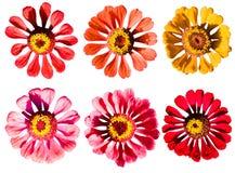 De inzameling van bloemen stock fotografie