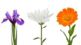De inzameling van bloemen Stock Afbeelding