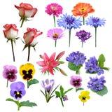 De inzameling van bloemen van rozenviooltje Stock Foto