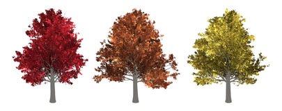 De inzameling van boom Esdoornboom op Witte Achtergrond wordt geïsoleerd die stock foto's