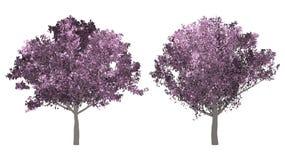 De inzameling van boom De boom van de kersenbloesem op witte achtergrond wordt geïsoleerd die stock foto