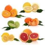 De Inzameling van Citrusvruchten Stock Afbeelding