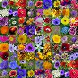 De Inzameling van de Bloem van de lente & van de Zomer stock foto