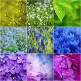 De inzameling van de bloemlente stock afbeeldingen