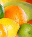 De inzameling van de citrusvrucht Royalty-vrije Stock Afbeeldingen