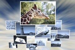 De inzameling van de foto stock afbeelding