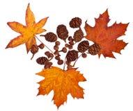 De Inzameling van de herfst Royalty-vrije Stock Foto