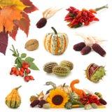 De inzameling van de herfst royalty-vrije stock fotografie