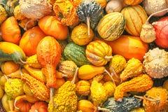 de inzameling van de herfstpompoenen Stock Afbeelding