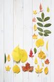 De inzameling van de kleurrijke herfst doorbladert Royalty-vrije Stock Foto