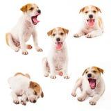 De Inzameling van de puppyhond stock foto
