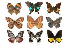 De inzameling van de vlinder stock foto's