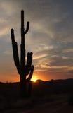 De inzameling van de woestijnzonsondergang stock foto's