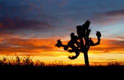De inzameling van de woestijnzonsondergang stock afbeelding