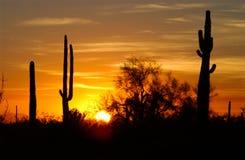 De inzameling van de woestijnzonsondergang stock afbeeldingen