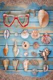 De inzameling van de zeeschelp stock foto