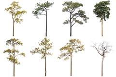 De inzameling van Geïsoleerde Bomen op witte achtergrond, a-beautif stock afbeelding