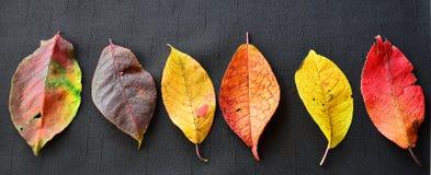 De inzameling van de herfst Kleurrijke pompoen op de lijst Patroon van gekleurde bladeren van installatie Stock Foto's