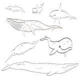 De inzameling van het beeldverhaalwalvissen van de lijntekening Royalty-vrije Stock Foto's
