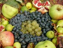 De inzameling van het fruit Royalty-vrije Stock Afbeeldingen