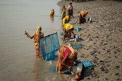 De inzameling van het garnalenzaad in Sunderban Stock Afbeelding