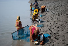De inzameling van het garnalenzaad in Sunderban Stock Foto