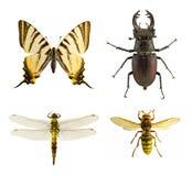De inzameling van het insect stock afbeeldingen