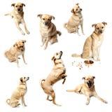 De inzameling van het puppy royalty-vrije stock fotografie