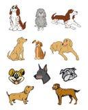 De inzameling van honden Royalty-vrije Stock Fotografie