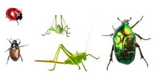 De inzameling van insecten die op wit wordt geïsoleerdl stock foto's