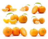 De inzameling van mandarijnen Royalty-vrije Stock Foto's