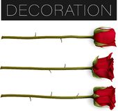 De inzameling van mooie rood nam Geïsoleerd op witte achtergrond toe Photo-realistic vectorillustratie van het gradiëntnetwerk stock illustratie