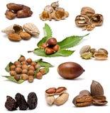 De inzameling van noten. royalty-vrije stock afbeelding